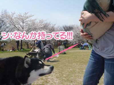 花見鳥屋野潟06.jpg