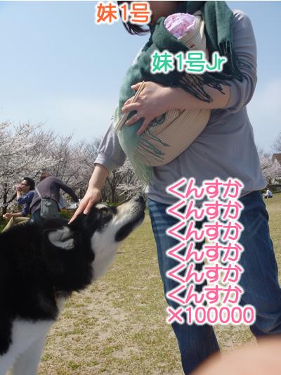 花見鳥屋野潟07.jpg