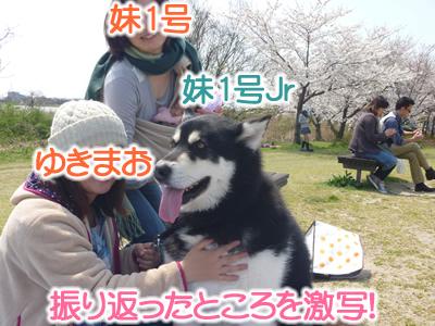 花見鳥屋野潟09.jpg