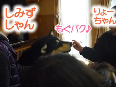 花見鳥屋野潟15.jpg