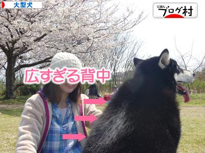 花見鳥屋野潟19.jpg