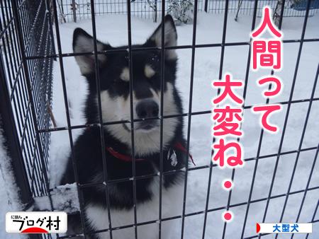 雪かき04.jpg