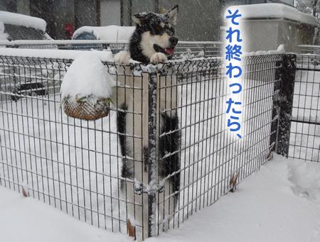 雪に埋まる車02.jpg