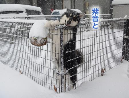 雪に埋まる車03.jpg