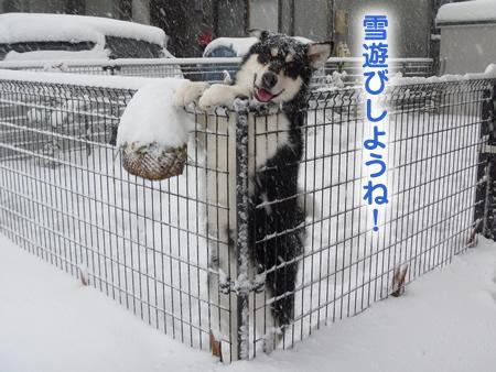 雪に埋まる車04.jpg