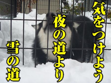 雪道01.jpg