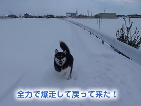 雪道05.jpg
