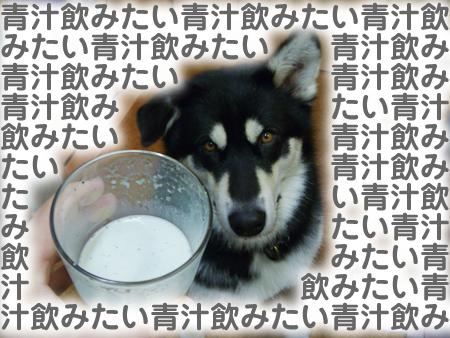 青汁06.jpg