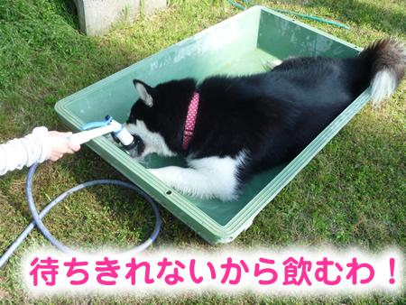 風呂06.jpg