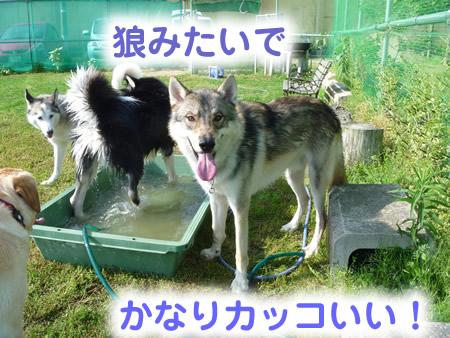 風呂16.jpg
