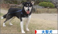 にほんブログ村 犬ブログ 大型犬へ