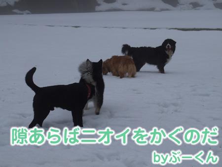 国安201227.jpg