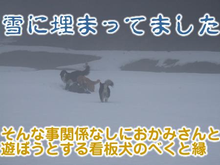 国安201236.jpg