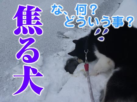 春分の日08.jpg