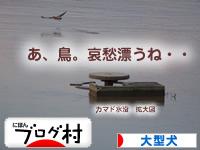 阿賀野川05.jpg
