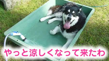 風呂09.jpg