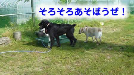 風呂10.jpg