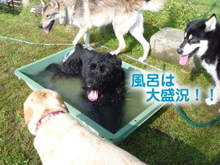 風呂22.jpg